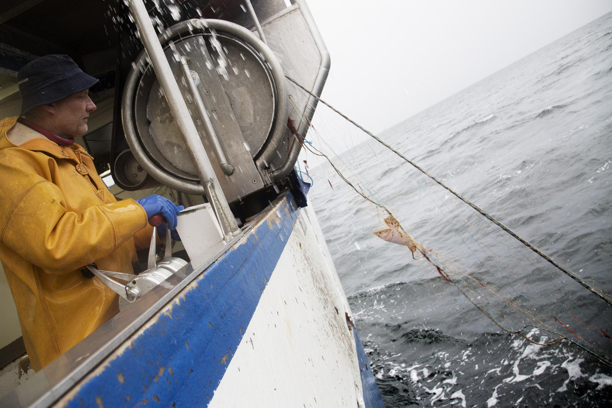 Når der dumpes havneslam er der meget få, eller ingen fisk, i kystfiskernes garn.